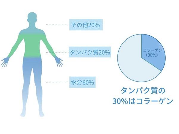 体内のタンパク質の3分の1はコラーゲン