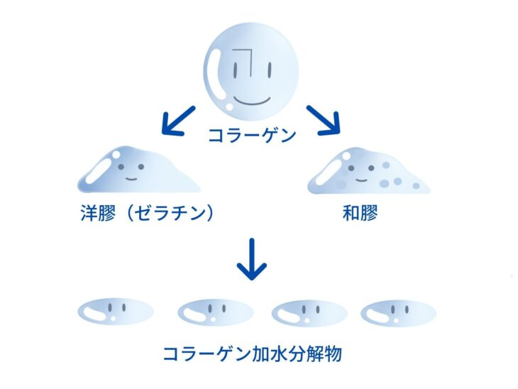 コラーゲン、ゼラチン、にかわ、コラーゲン加水分解物